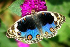 Beautiful Butterfly (top 10)