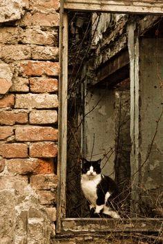 Vukovar / Croatia 2011