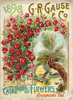 1898 G.R. Cause & Co  Catalogue of Flowers, Richmond IND.