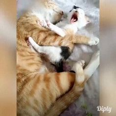 funny cats and dogs videos funny cats ; funny cats and dogs ; funny cats can't stop laughing ; funny cats and dogs videos ; Cute Funny Animals, Cute Baby Animals, Cute Dogs, Funny Cats, Animals Dog, Animals Images, Funny Videos Of Cats, Baby Funny Videos, Cute Kitten Videos