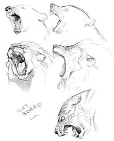 Exciting Learn To Draw Animals Ideas. Exquisite Learn To Draw Animals Ideas. Animal Sketches, Art Drawings Sketches, Animal Drawings, Cat Anatomy, Animal Anatomy, Lion Sketch, Creature Drawings, Poses References, Art Reference Poses