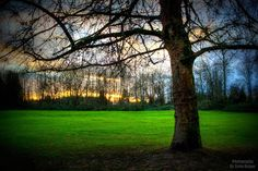 ~Rest~ By Ernie Kasper #tree   #branches   #field   #grass   #forest   #peaceful   #outdoors   #derbyreach   #canada   #langley   #sunset   #clouds   #nature