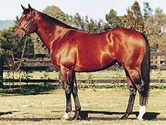 #Progeny of Northern Dancer: Danehill http://www.pedigreequery.com/danehill - http://wp.me/p291tj-e6