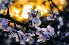 Blossom !! Photo by pratyush gautam -- National Geographic Your Shot