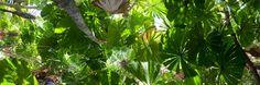 Google-Ergebnis für http://cdn.lightgalleries.net/4bd5ec0e49379/images/NQ0900396P-Daintree-Rainforest-1.jpg