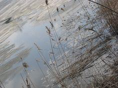 4 SEASONS/SPRING/ICE/SNOW 2010 by Heli Aarniranta on ARTwanted Digital Photography, Outdoors, Ice, Gardening, Snow, Seasons, Spring, Beautiful, Lawn And Garden