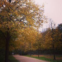 #Outono no #Tiergarten! #yellow #amarelo #fall #Germany #Deutschland #Alemanha #Berlim #Berlin #turismo #viagem #travel #trip #travelblog #travelblogger #viajar #viajando