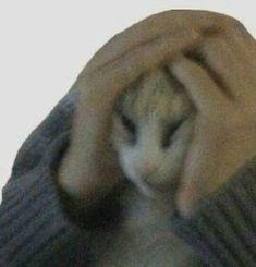 Cat Memes, Dankest Memes, Funny Memes, Animal Memes, Funny Animals, Cute Animals, Foto Cartoon, Funny Profile, Sad Cat