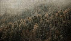 Woods in winter - null