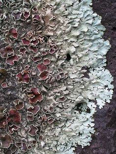^^ beauuutiful lichen