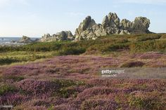 Stock Photo : France, Brittany, Finistère, Ouessant island, heath