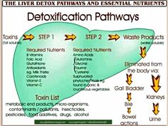 Our liver filters out 100s of toxins everyday, bacterial, perticides, herbacides, food additives, pollution, drugs, and alcohol. It also takes the fat we lose to process.  This is why Zija Premium tea is such an important part of our weight management system. If you are trying to lose weight and you aren't supporting your liver... it is having to work too hard. And you get 'stuck' then consider using more tea, more often... or finding some way to detoxify your liver…