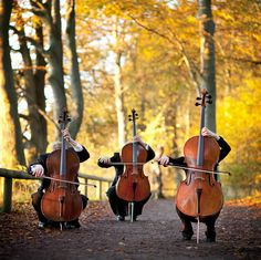 28 Best String Quartet Photos images in 2014 | String quartet