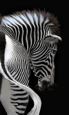 Zebra stripes in beautiful painting. Imagine a horse colored like this! Joachim G. Pinkawa Zebra stripes in beautiful painting. Imagine a horse colored like this! Joachim G. Arte Zebra, Zebra Art, Zebra Painting, Nature Animals, Animals And Pets, Cute Animals, Wildlife Photography, Animal Photography, Insect Photography