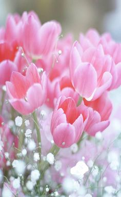 💐🌺💐 Flowers – Fahriye – Join the world of pin Tulips Flowers, My Flower, Spring Flowers, Planting Flowers, Beautiful Flowers, Pink Tulips, Frühling Wallpaper, Flower Phone Wallpaper, Orquideas Cymbidium