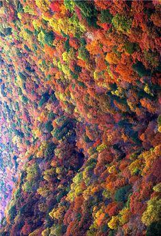 flentes:    A Sea of Fall Colors,Magadelic Rock