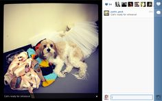 Are Ballerinas Dog or Cat People? Instagram and the New York City Ballet