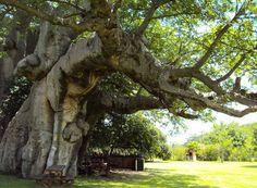 Sunland Baobab Pub