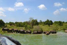 Sri Lanka, Uda Walawe National Park.