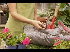 Удобрение для комнатных растений на основе дрожжей – это не только полезно и эффективно, а еще просто и доступно. Во-первых, дрожжи могут найтись на кухни многих хозяек, подойдут в любом виде – сыром или сухом.
