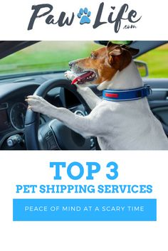 Long distance travel can be a frightening experience for dogs, cats, and other pets. The single most important step you can take to maximize your pet's comfort during the relocation process is to choose a safe, trustworthy pet shipping company