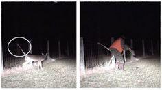 Buck saved by good samaritan  Credit: ViralHog #news #alternativenews