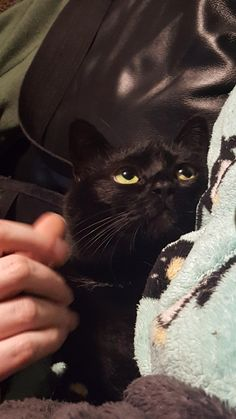 black cat Get someone who looks at you the way our - cat I Love Cats, Cute Cats, Funny Cats, Cute Black Cats, Baby Animals, Funny Animals, Cute Animals, Crazy Cat Lady, Crazy Cats