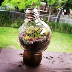 Behold... my recycled light bulb terrarium.  The base is a recycled tarnished…