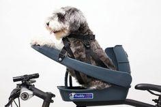 Buddy Rider - Dog Bike Seat — Premium European Urban City Bicycles, Cargo Bikes, Dutch Bikes, Commuter Bicycles, Gravel bikes in Canada Dog Bike Seat, Dog Bike Basket, Bicycle Seats, Bike Baskets, Bicycle Sidecar, Miniature Schnauzer Puppies, Schnauzer Puppy, Schnauzers, Bicycle Dog Carrier