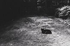 by tetsuya miyoshi, via Flickr