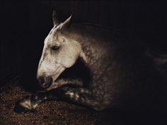 The Heart of a Beast: Charlotte Dumas' Poignant Animal Photography - LightBox