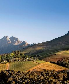 Where to Go in South Africa's Wine Country is part of Where To Go In South Africas Wine Country Conde Nast Traveler - South Africa's Winelands—from Stellenbosch to Franschhoek—are worth more than just a day trip Oh The Places You'll Go, Places To Visit, Westerns, Wine Safari, Namibia, Maputo, Africa Travel, Wine Country, Where To Go