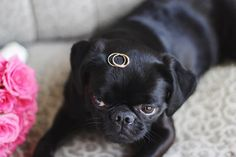 Our wedding. Our dog Micke, agriffon petit brabancon, as our ringbearer. Photo inspiration.