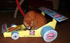 I fiddled with the exposure on Timmy Tomcat's entry. #cardwoodderby