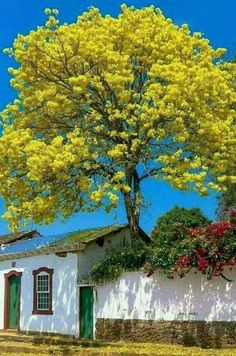 Tree behind the wall Beautiful Landscapes, Beautiful Images, Beautiful Flowers, Beautiful Scenery, Unique Trees, Colorful Trees, Image Nature, Nature Tree, Tree Forest