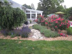 Double Knockout Roses with lavender and salvia lined path.