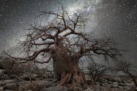 http://www.nature-obsession.fr/environnement/diamond-nights-beth-moon-immortalise-plus-vieux-arbres-afrique.html