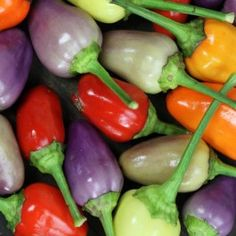 Chinese 5 Color Pepper (1 per Sq'): Screaming hot little peppers turn a rainbow of vibrant colors; from purple, cream, yellow, orange to red as they ripen. Need I say ornamental? The plants are great for containers inside. Just pick a few any time to liven up your salsa.