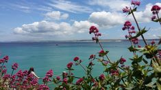 St Ives, Cornwall St Ives Cornwall, Seattle Skyline, Saints, Travel, Viajes, Destinations, Traveling, Trips