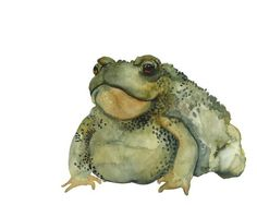 Burp toad art archival print by amberalexander on Etsy, $20.00