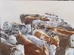 Nguni Cattle by Leigh Voigt