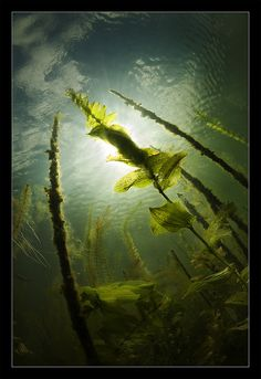 photography underwater
