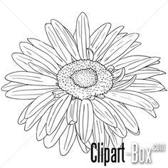 CLIPART GERBERA FLOWER SKETCH STYLE