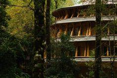 Reino Fungi Lodge – Huilo Huilo Reserva Biológica – Patagonia Codillera de los Andes Chile