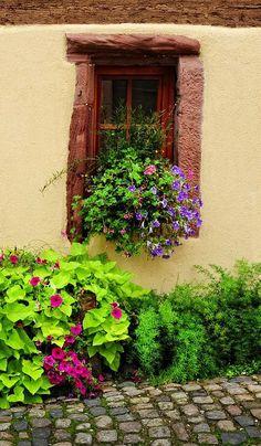 pretty #window Alsace, France