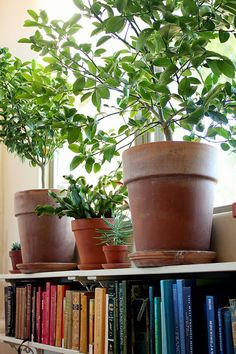 two shelves under window, plants on top