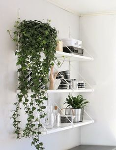 Idea for plant trailing off side of expedit bookcase | MintSix blog