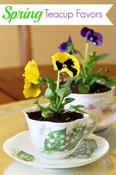 Plant pansies in thrift store teacups for DIY Easter and spring table decor. Would make creative favors or table number holders for weddings too!