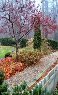 Juniper Hill Farm in zone 5b Francestown, NH is a New England garden designed for year round interest, especially winter.  This picture is from late November