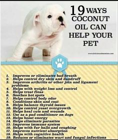 Coconut oil for pet health. I add coconut oil to my dogs food daily. They love it and I have seen a huge improvement and not only in their coat/skin. Yorkies, Pomeranians, I Love Dogs, Puppy Love, Coconut Oil For Dogs, Gato Gif, Fu Dog, Oils For Dogs, Pet Health